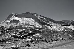 Himalayan landscape monochrome! (draskd) Tags: bw monochrome landscape mountainside himachalpradesh horseride horserider himalayanlandscape 492016 72ndexplore 9thapril2016
