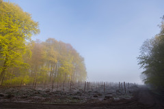 IMG_3470 (ZoRRaW photography) Tags: mist tree fog forest spring luxembourg neuhausgen