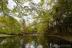 20160413-02-Pond reflections at Kyoto Botanic Gardens (Roger T Wong) Tags: travel trees holiday japan reflections pond kyoto canonef1740mmf4lusm botanicgardens 2016 canon1740f4l canoneos6d rogettwong