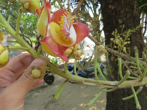 Flora, Chiang mai