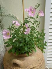 (Psinthos.Net) Tags: flowers spring pot april   psinthos
