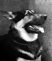 Leo (Antnio Jos Rocha) Tags: dog co amigo leo leal lealdade