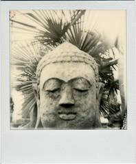 Buddharpa (R. Drozda) Tags: seattle bw film polaroid concrete sx70 washington buddha palm sodo instantfilm drozda dariosstatuary impossibleprojectbwforsx70