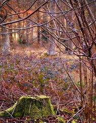 (ShelleyCorinne) Tags: trees colour leaves bluebells forest moss spring olympus depthoffield bark olympuspen blackwoodforest micro43 olympusepl1