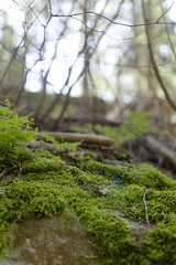 (saramonty24) Tags: california trees green forest moss sticks hiking branches sierra foliage national