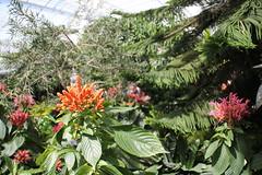 IMG_2446 (Mercar) Tags: canada butterfly garden botanical montreal go butterflies jardin free greenhouse botanic botaanikaaed qubeck