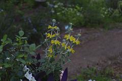 _DSC2083 (Osamu1965) Tags: flower japan zeiss garden spring sony contax jp   okayama     a7m2  carlzeissvariosonnart2870mmf3545mm
