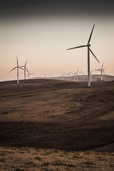 harvest (liam.jon_d) Tags: landscape lowlight afternoon wind australian australia alternativeenergy sa agriculture southaustralia turbine windturbine windfarm agricultural windpower eveninglight afternoonlight renewableenergy yorkepeninsula southaustralian billdoyle trustpower