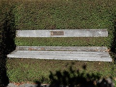 Bench for Basil the Cat (mikecogh) Tags: overgrown plaque bench hedge wellington botanicgarden embedded