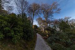 Trelissick Pathway (trevorhicks) Tags: trees canon garden path sigma national trust 6d tresillick