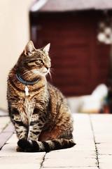 Lenka (aurorapesonen) Tags: canon eos kitty animalphotography petphotography photogarpher catphotography 1000d