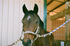 (unctura) Tags: film analog 35mm outdoors equestrian equine horsesonfilm