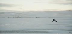 Ski runners (arnthorr) Tags: winter sun tree ice iceland ar tr ragnar brfell starfilter vetur sl bstaur arnr sigmar slei vatni arnthorr arnrragnarsson arnthorragnarsson bauluvatn iceslade sigmarogragnar