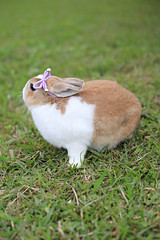 (ina070) Tags: rabbit canon  6d  canon6d