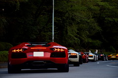 Lamborghini's parade (Andr.32) Tags: italy cars car japan photography tokyo super spyder exotic    ginkgobiloba aoyama lamborghini  supercar launchparty v10 gallardo supercars roadster v12 sportcar   sportcars huracn gallardospyder meijijingugaien aventador lp7004 aventadorlp7004 aventadorlp7004roadster lp6104 huracnlp6104 lineofgingkotrees lamborghiniaventadorsvlaunchparty