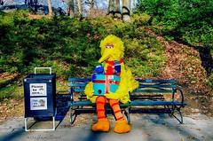 Please be nice to Big Bird, Elmo and Cookie Monster.., Central Park New York City (mitzgami) Tags: nyc newyorkcity newyork bigbird flickr centralpark manhattan elmo sesamestreet cookiemonster