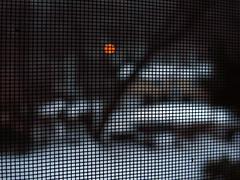 The Confines of Winter (Boneil Photography) Tags: winter macro canon dof bokeh screen powershot f25 shallowdepthoffield g16 boneilphotography brendanoneil