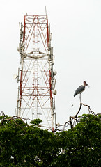 Birds antenna