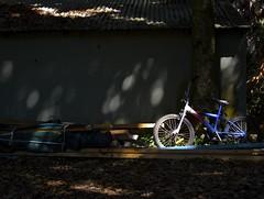Bike (Padmacara) Tags: bike bicycle australia nsw dappled g11 bole shadowlight wallislake tiona
