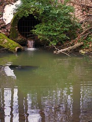 The Sewer Grate (John Bense) Tags: water creek river flow grate moss hole pipe tunnel cage drip flowing sewer rockcreekpark rockcreek