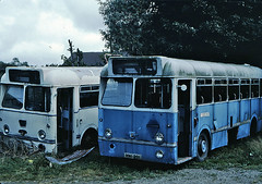 St Kevin's (Doyle, Roundwood) XNI 201, SHE 165 (mj.barbour) Tags: bus st cub tiger service doyle kevins leyland mcw roundwood puuc1