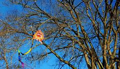 Sign of an Early Spring (HereInVancouver) Tags: kite tree vancouver stanleypark blueskies kiteeatingtree dragonkite mobilephonephotography samsunggalaxy6 signofanearlyspring