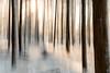 IMG_8729 (BernardFalkena) Tags: winter sun snow abstract tree bomen sneeuw bos zon bewogen