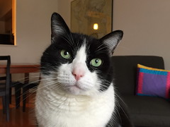 Oliver iPhone Portrait (Mr.TinDC) Tags: pet cats pets cute animals cat oliver kitty kitties