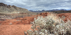 Desert Holly (magnetic_red) Tags: red plant storm mountains clouds landscape colorful desert nevada stormy holly lakemead americanwest mohave atriplex hymenelytra