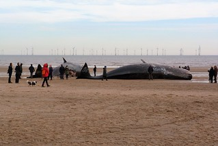 A SAD END ON SKEGNESS BEACH