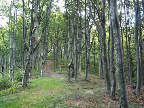 Bukowy las pod Szeroką w Górach Bardzkich