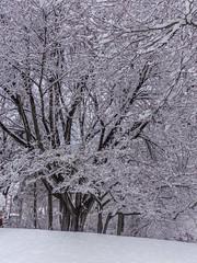 DSC01615-2 (johnjmurphyiii) Tags: winter usa snow connecticut shelly cromwell originaljpeg johnjmurphyiii 06416 sonycybershotdsch90