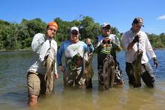 12495037_933810910041927_3613313030028710053_n (Nelson Lage - pescamazon.com.br) Tags: trip travel fish river fishing amazon bass peixe catfish xingu flyfishing casting tucunare pescaria amazonia peacockbass trombetas payara