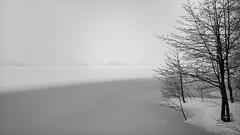 Naked trees (Antti Tassberg) Tags: winter blackandwhite bw lake snow tree monochrome silhouette espoo landscape smartphone microsoft snowing snowfall talvi puu 950 järvi lumia pitkäjärvi lumisade laaksolahti iphoneography win10 lumia950