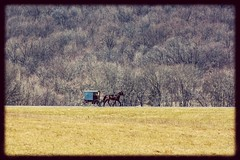 Simpler times. (SaltyDogPhoto) Tags: road travel horse field landscape photography nikon pennsylvania culture amish pa transportation lancaster nikkor buggy middlecreek horseandcarriage horseandbuggy lancasterpa amishcountry nikkor70300g nikonphotography nikond7200