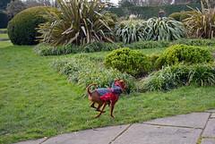 Funny little chap (Caulker) Tags: runningdog canonspark 02032016
