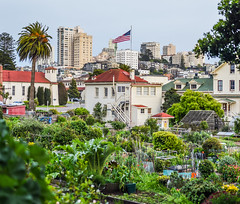 the general's garden (pbo31) Tags: sanfrancisco california city panorama usa color green nature america garden march spring nikon general flag over large panoramic depthoffield bayarea fortmason stitched russianhill 2016 boury pbo31 d810