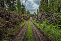Shocking surprise in forest (Kees van Niftrik Photography) Tags: forest disaster devastation primeval canoneos5dmk2