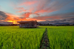 The Rest House (nadzli.azlan7) Tags: sunset sky beauty field clouds landscape landscapes paddy dusk sunsets malaysia borneo burningsky sabah paddyfield dusks burningclouds amazingsky keningau amazingsabah