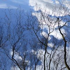 P1120958 (erix!) Tags: clouds branches wolken bluesky ste twigs blauerhimmel zweige