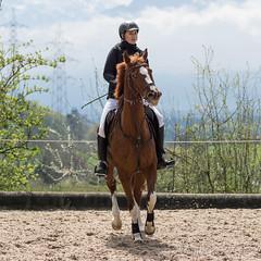 DSC08762_s (AndiP66) Tags: gelb springen hildisrieden reitsportcenter estermann traselinge 2016 september pferd horse schweiz switzerland kantonluzern cantonlucerne concours wettbewerb horsejumping equestrian sports springreiten pferdespringen pferdesport sport sony sonyalpha 77markii 77ii 77m2 a77ii alpha ilca77m2 slta77ii sony70400mm f456 sony70400mmf456gssmii sal70400g2 andreaspeters luzern ch