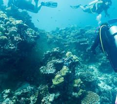 Cliffhanger, Filitheyo - Maldives - Lieux, Filitheyo - Maldives - Site, Maldives - Lieux, Maldives - Site 1626.jpg (hgh68) Tags: site maldives plonge cliffhanger lieux filitheyo