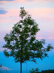 Jantzen Beach 20140704 (caligula1995) Tags: tree clouds oregon portland dusk columbiariver 2014 jantzenbeach