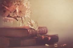 Beautiful blosoom (Ro Cafe) Tags: pink flowers light stilllife soft blossom books pastels textured nikond600 nikkormicro105f28