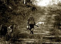 Morning Hunt (Steven Cushman) Tags: wood dog lab boots hunting ducks hunter shotgun hunt