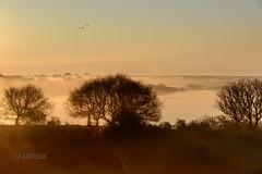 Norderney Polder Sonnenaufgang (artus8f) Tags: warm flickr nebel himmel norderney gelb serengeti landschaft bume sonnenaufgang stille deich gnse