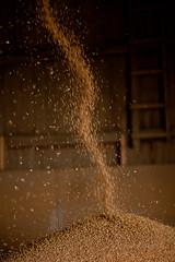 o_IMG_8858_MartenSvensson (Bad-Duck) Tags: mat hst vete jordbruk grda lantbruk rstid livsmedel krna spannml hstvete livsmedelsproduktion