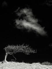 Spiritual Lift (Dylan Nardini) Tags: uk trees light england sky white black clouds ir mono landscapes nikon lakedistrict infrared converted ullswater d80
