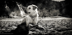 P1060790 (Alfonso Chico) Tags: blackandwhite pets blancoynegro dogs perros animales mascotas panormico monochromia