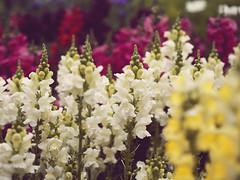 Flower Isle (Jam-Gloom) Tags: flowers flower floral pen flora bokeh olympus depthoffield jungle olympuspen isle gardencentre bokehlicious willingtongardencentre frostsgardencentre olympuspenepm2